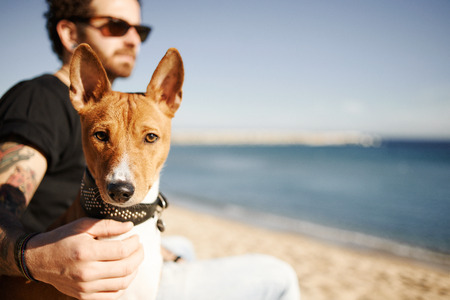 lose up: ?lose up portrait dog breed Basenji sitting in sand and looking at camera enjoying sun in Barcelona. In the background beautiful young man with tattoos wearing black t-shirt and jeans. Young multiracial Caucasian man.