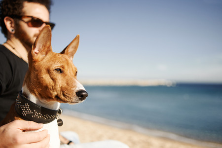 lose up: ?lose up portrait dog breed Basenji sitting in sand and looking into the distance enjoying sun in Barcelona, Spain. In the background beautiful young man with tattoos wearing black t-shirt and jeans. Young multiracial Caucasian man. Stock Photo
