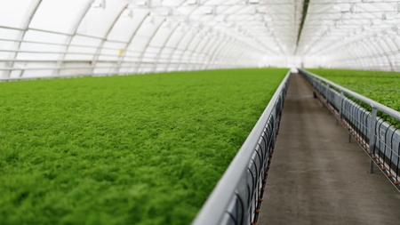 in the greenhouse: Young plants growing in very large plant commercial greenhouse