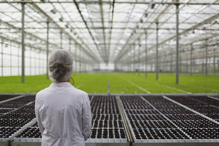 Close-up back biotechnology woman engineer examining a plants for disease from greenhouse Banco de Imagens