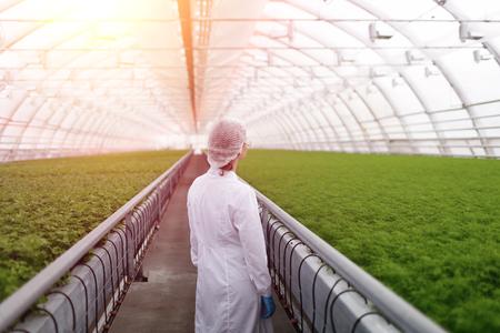 biotecnologia: cient�ficos agr�colas junior investigando las plantas y enfermedades en invernadero con el perejil y ensalada verde. Mujer ingeniero de la biotecnolog�a examen de hoja de la planta para la enfermedad