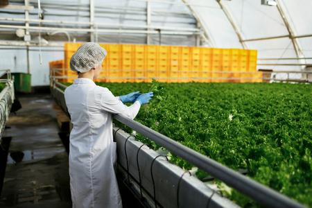 Close-up back portret biotechnologie vrouw ingenieur behandeling van een plant voor de ziekte van de kas boerderij. Kwaliteitscontrole eaf voor de ziekte