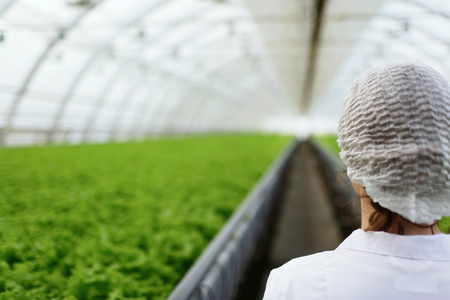 investigación: cient�ficos agr�colas junior investigando las plantas y enfermedades en invernadero con el perejil y ensalada verde. Mujer ingeniero de la biotecnolog�a examen de hoja de la planta para la enfermedad