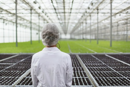 Close-up back portrait biotechnology woman engineer examining a plants for disease from greenhouse farm. Quality control eaf for disease