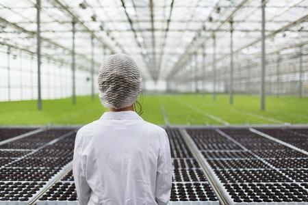 invernadero: Primer plano de espalda Mujer ingeniero de la biotecnolog�a retrato examinar a las plantas para la enfermedad de la granja de efecto invernadero. EAF de control de calidad para la enfermedad