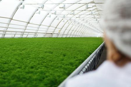 biotecnologia: científicos agrícolas junior investigando las plantas y enfermedades en invernadero con el perejil y ensalada verde. Mujer ingeniero de la biotecnología examen de hoja de la planta para la enfermedad