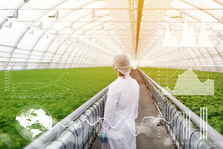 Quality control. Rear view of woman agricultural scientist or agronom standing in greenhouse, making scientific research, examining plants for diseases. Double exposure. Worldwide connection interface