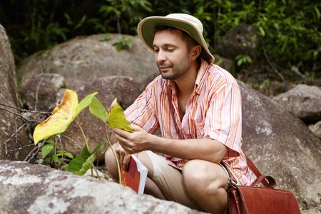 Environmental protection and conservation concept. Attractive Caucasian botanist in striped shirt and hat conducting research of exotic plant with big leaves while exploring wildlife in rainforest