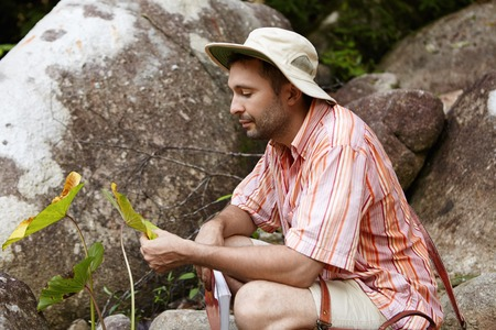 standing stone: Bearded biologist wearing hat sitting among rocks and holding leaves of green plant with spots, looking with concerned expression while examining them for diseases, conducting environmental studies