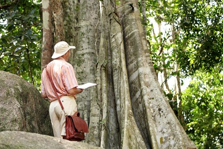 field work: Rear shot of ecologist or conservationist in hat studying species at field work, standing at big tree in nature park. Scientist with briefcase conducting biological research, holding notebook