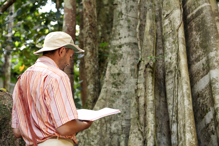 botanist: Back view of male biologist or botanist wearing hat and shirt stnanding in front of gigantic tree with notebook in his hands, making research, testing environmental conditions in tropical forest