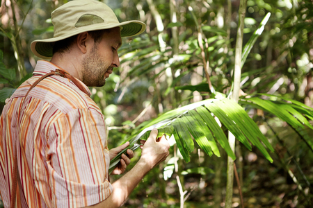 Ecology and environmental conservation. Ecologist in panama hat examining leaves of green plant, searching for leaf spot diseases, looking serious. Male scientist making scientific study outdoors Stok Fotoğraf