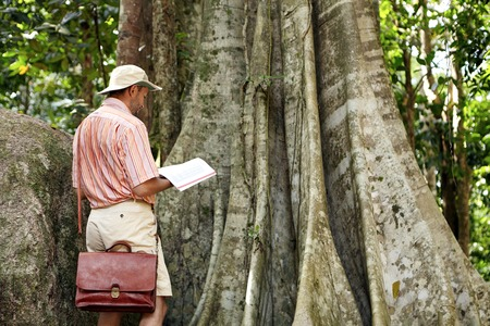 botanist: Nature and environmental protection and conservation. Botanist in hat and shirt reading notes in his notebook while studying characteristics of emergent tree in rainforest on sunny day. View from back Stock Photo