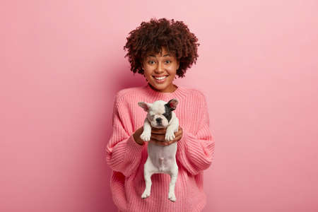 Ethnic beautiful glad woman gives you little french bulldog puppy, asks to care about animal, has toothy smile, wears oversized jumper, isolated over rosy wall. Monochrome shot. This pet is for you Standard-Bild