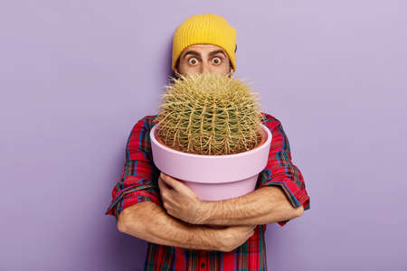 Shot of surprised European man florist holds pot of big prickly cactus, stares with wide opened eyes, wears yellow hat and checkered shirt, has to replant houseplant, isolated on purple background.