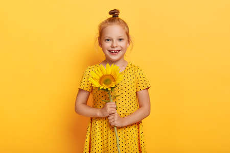 Glad small girl with ginger hair knot, had walk at field during summer, picks up sunflower, wears yellow polka dot dress, smiles broadly, poses indoor, enjoys leisure time. Childhood concept