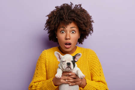 Shocked woman carries little puppy, surprised to see what mess it did in house, has to clean after dog, being in stupor, has curly hairstyle, isolated over purple background. Stunned girl has ill pet