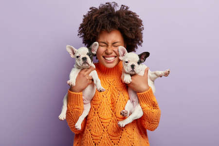 Isolated shot of joyful pleased dark skinned lady rejoices having two puppies with black ears and noses, likes animals, wears orange oversized sweater, isolated over purple background. People and pets