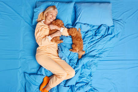 Glad mature woman petting two brown puppies in bed has good rest wears pajamas and socks poses on blue bedclothes. Middle aged female hugs favorite pet in bedroom. Dog lover. Friendship concept
