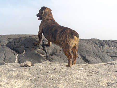 Dog on his back, leaning with his front paws on the rock.