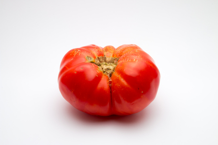 imperfect: Large, imperfect brandywine tomato (Solanum lycopersicum) on white background