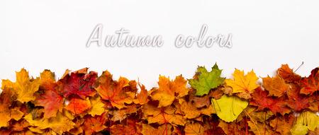가을 배너, 헤더에 이상적, 흰색 배경에 나뭇잎. 위의 텍스트를위한 공간입니다.
