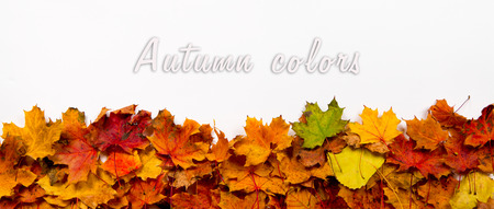 autumn leaf frame: Autumn leaves on white background, ideal for banners, headers. Space for text above.