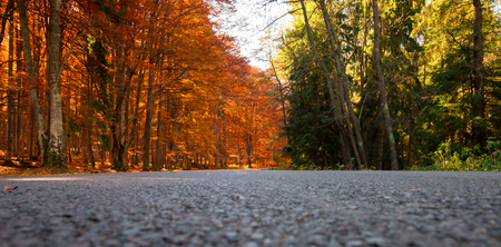 low angles: Forest road with orange, deciduous trees on one side, and green on the other. Low angle of view Stock Photo