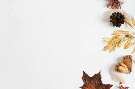 Layout of autumn dry materials of different trees on a white background. Copy space, flat lay, autumn frame concept