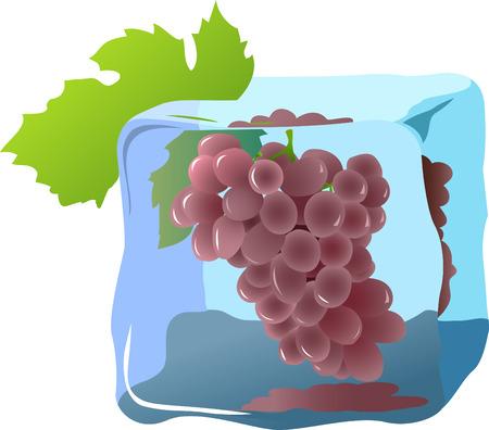 Fresh grape frozen in ice Vector