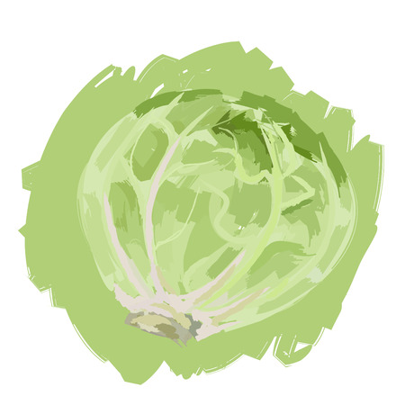 Art. Vector illustration of cabbage