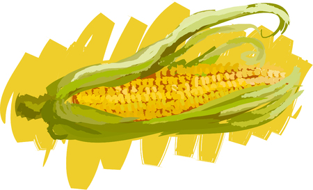 Art. Vector illustration of maize Illustration