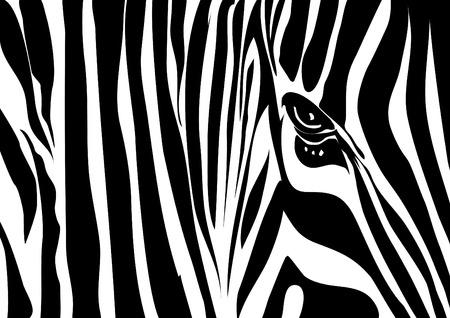 Vector image of a zebra texture Illustration