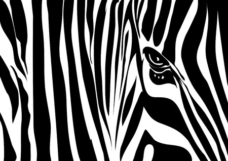 camouflage skin: Vector image of a zebra texture Illustration