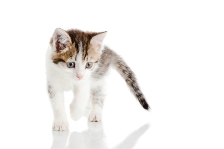 sidewards: Small kitten looking to camera isolated over white background