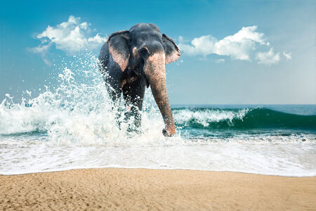 Big wild indian elephant bathing in sea water photo