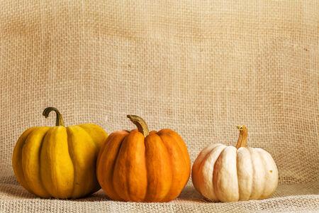 sacking: Pumpkins on abstract rustic coarce sacking background