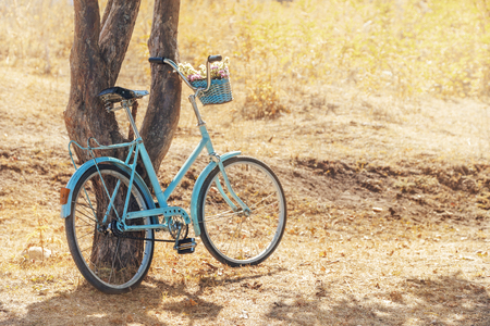 vintage landscape: Vintage blue bicycle with basket of flowers near tree at park