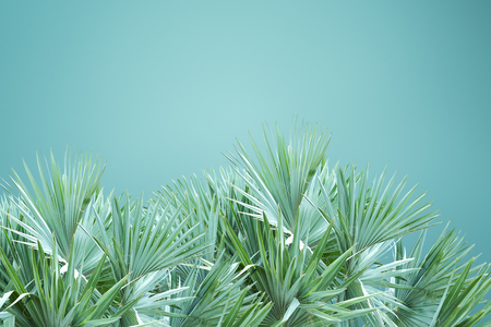 Abstract palm tree leafs background isolated over green background Reklamní fotografie
