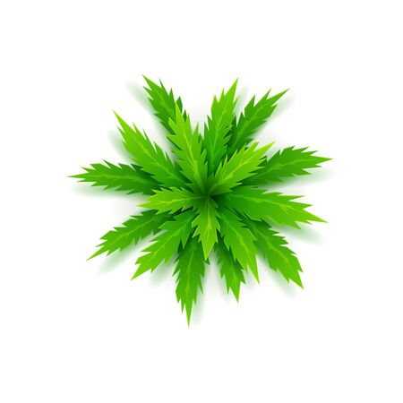 Uitzicht op cartoon palmboom bovenop. Vector illustratie.