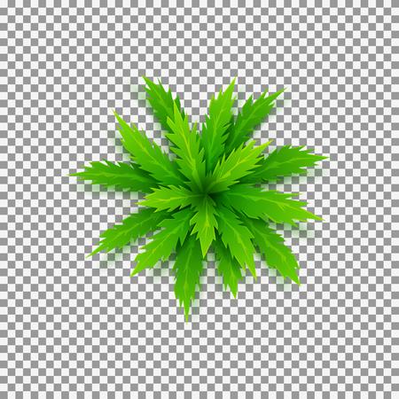 Top view on green cartoon palm tree. Vector illustration.