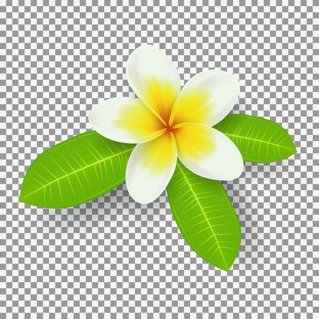 熱帯の夏の花のベクター イラストです。抽象的なパターン。