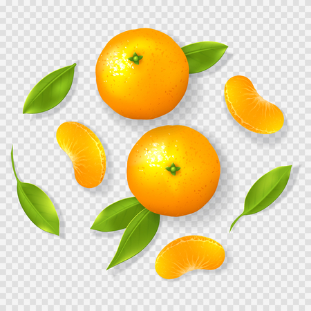 Realistic mandarin isolated on transparent background. Top view on whole mandarins, leaves and pieces. Vector illustration.