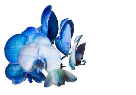 fiore isolato: Bel fiore isolato