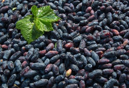 honeysuckle: fresh ripe berries of honeysuckle Stock Photo