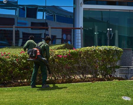 pracownik usuwa liście z trawnika