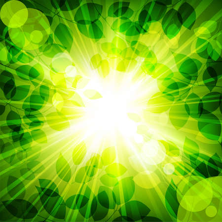 rays of sun in green leaves. Vector illustration Vector