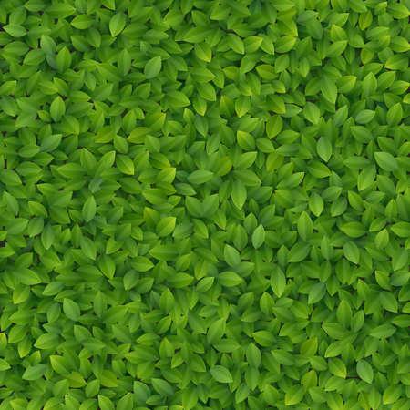 Green leaves texture  illustration Stock Vector - 14749074