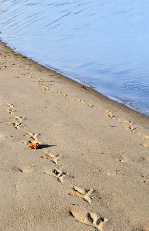 locomotion: Footprints in the Sand