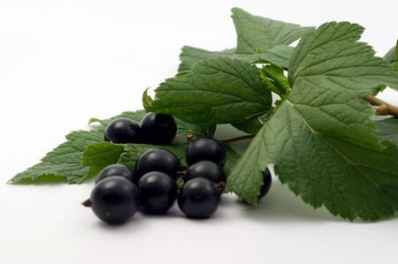 Fresh ripe currant on a white background